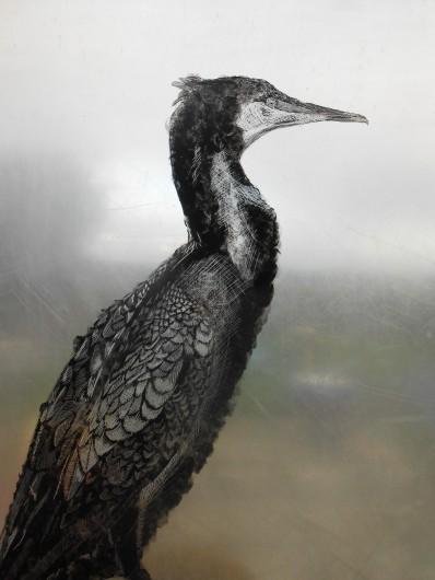'Cormorant',Study on Perspex